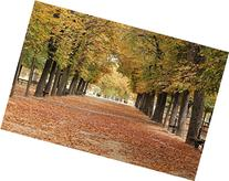 16x24 in. Rebecca Plotnick Autumn Leaves