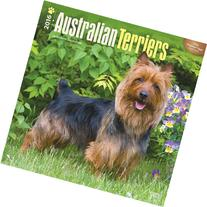2016 Australian Terriers Square 12x12 Wall Calendar