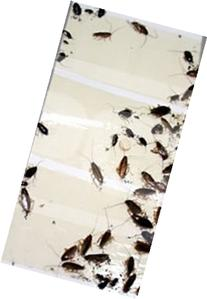 24 Roach Insect Spider Bed Bug Scorpion Silverfish Traps Bug