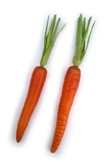 Artificial Carrot Each Single