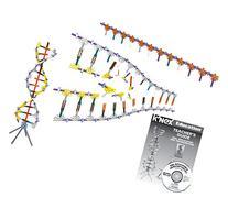K'NEX Education - DNA Replication and Transcription Set -