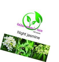 Golden autumn farm- Night Blooming Jasmine 100 seeds