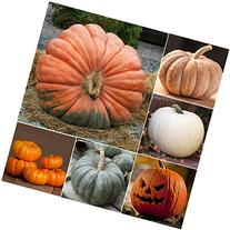 Package of 50 Seeds, Spooky Pumpkin Mixture  Non-GMO Seeds