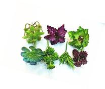 Set of 7 Different Succulents, Artificial Cactus Plants