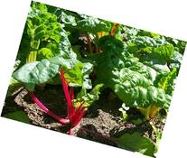 David's Garden Seeds Swiss Chard Rainbow D32951  500 Organic