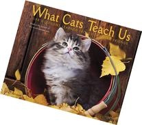 What Cats Teach Us 2014 Wall Calendar
