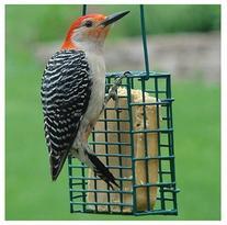 Audubon Suet Cage Feeder Steel