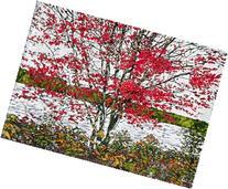 Autumn Pond 5