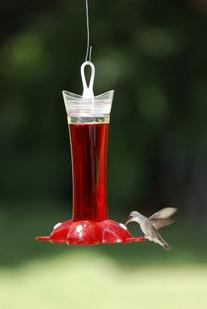 Birdscapes 279 Deluxe Rose Petal 12-ounce Glass Hummingbird