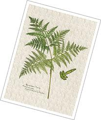 Botanical Print of Bracken Fern, High Quality Giclee Print,