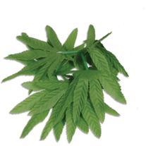 """Tropical Fern Leaf Wristlet/Anklet 10"""" 1/Pkg"""