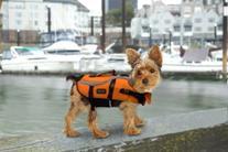 Designer Pet Saver Life Jacket, X-Small