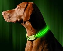 LED Dog Collar, USB Rechargeable, Small , Neon Green