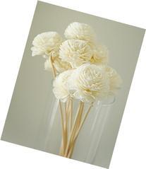 Exotic Elegance Set of 10 Jasmine Design Sola Flower for