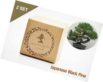 Set of 2 Japanese Black Pine Bonsai Seed Kit- Gift -