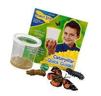 Insect Lore 5 Live Caterpillars – Cup of Caterpillars