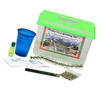 LIVE Frog Growing Kit SHIPPED WITH 2 Tadpoles- Leopard Frog