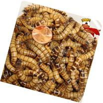 300ct Live Superworms, Feed Reptile, Birds, Fishing Best