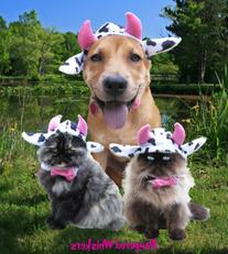 Mad Cow costume for dogs and cats