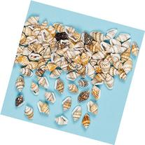 Mini Craft Shells 12mm with Hole for Threading, Kid's Craft