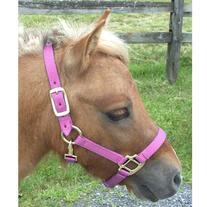 Intrepid International Nylon Miniature Horse Halter, Pink,