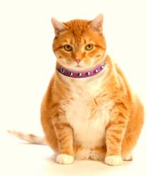 Outlaw Pink Studded Leather Safety Cat Collar