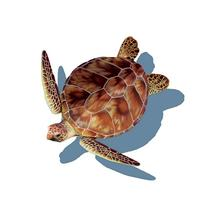 Porcelain Loggerhead Turtle w/Shadow Medium