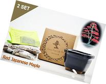 Set of 2 Red Japanese Maple Bonsai Seed Kit- Gift - Complete