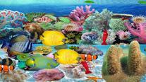 Soft Coral Sea
