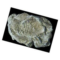 Woodland Scenics WS 1237 Rock Mold-Wind Rock - 5 x 7
